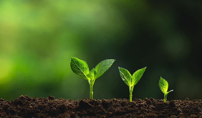 Three plants growing from soil used as Skillpod's Induction training course banner